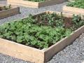 placentia-garden-2009-003