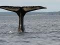 whale-tale-near-trinity